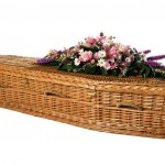 environmental_coffin-willowb__large
